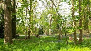 Bluebell Woods Stow Bardolph