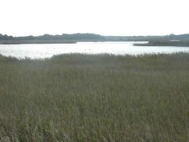 Suffolk Reed Beds